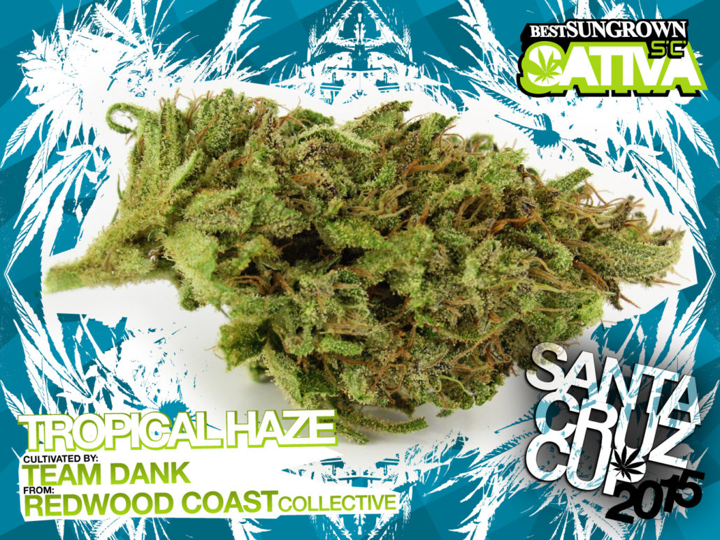 scc15_SGs_tropical-haze