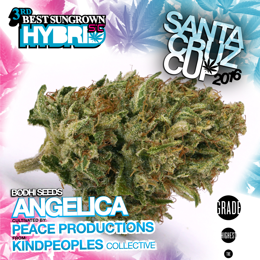 Peace Productions Kindpeoples Angelica Bodhi seeds best hybrid