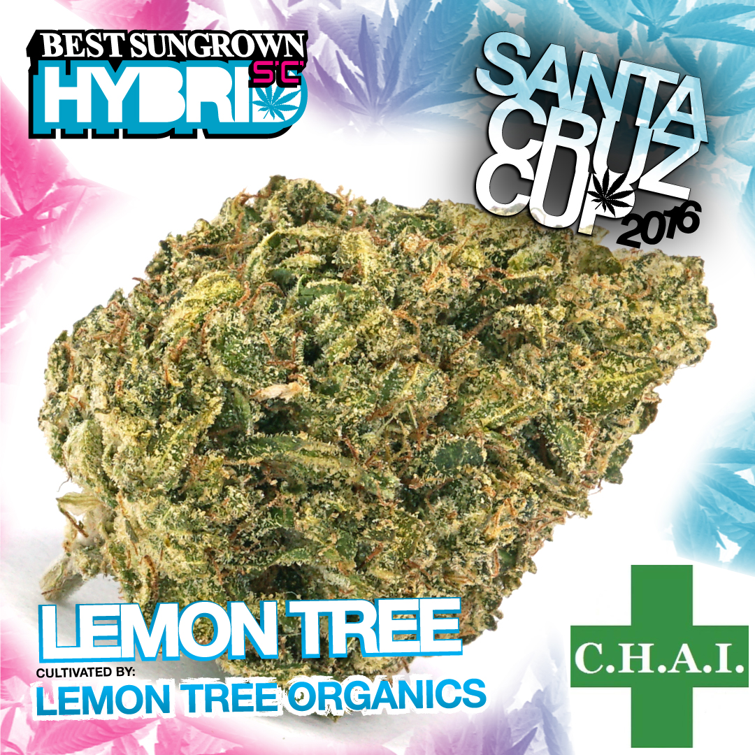 Lemon Tree Organics