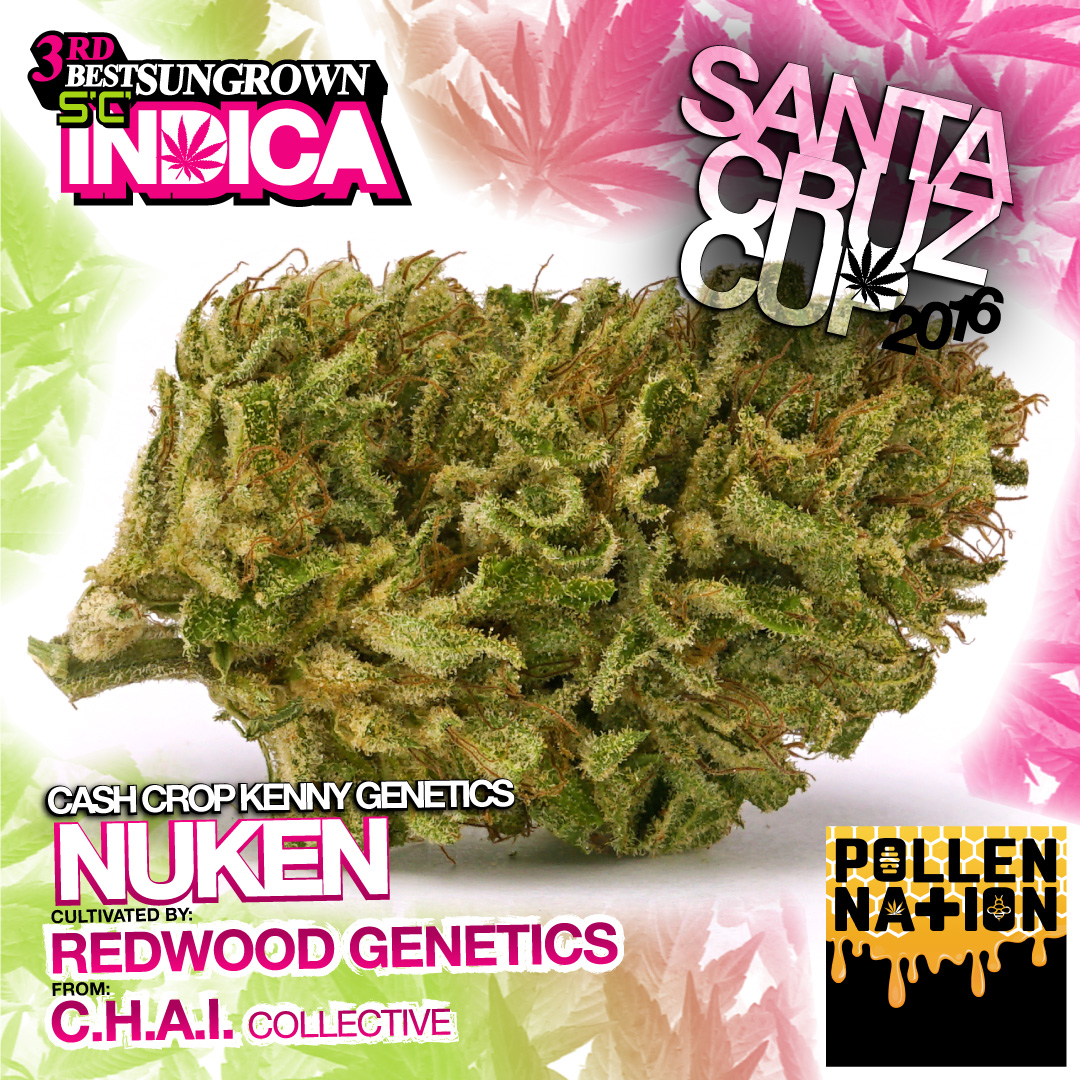 Redwood genetics Nuken Cash crop kenny chai collective