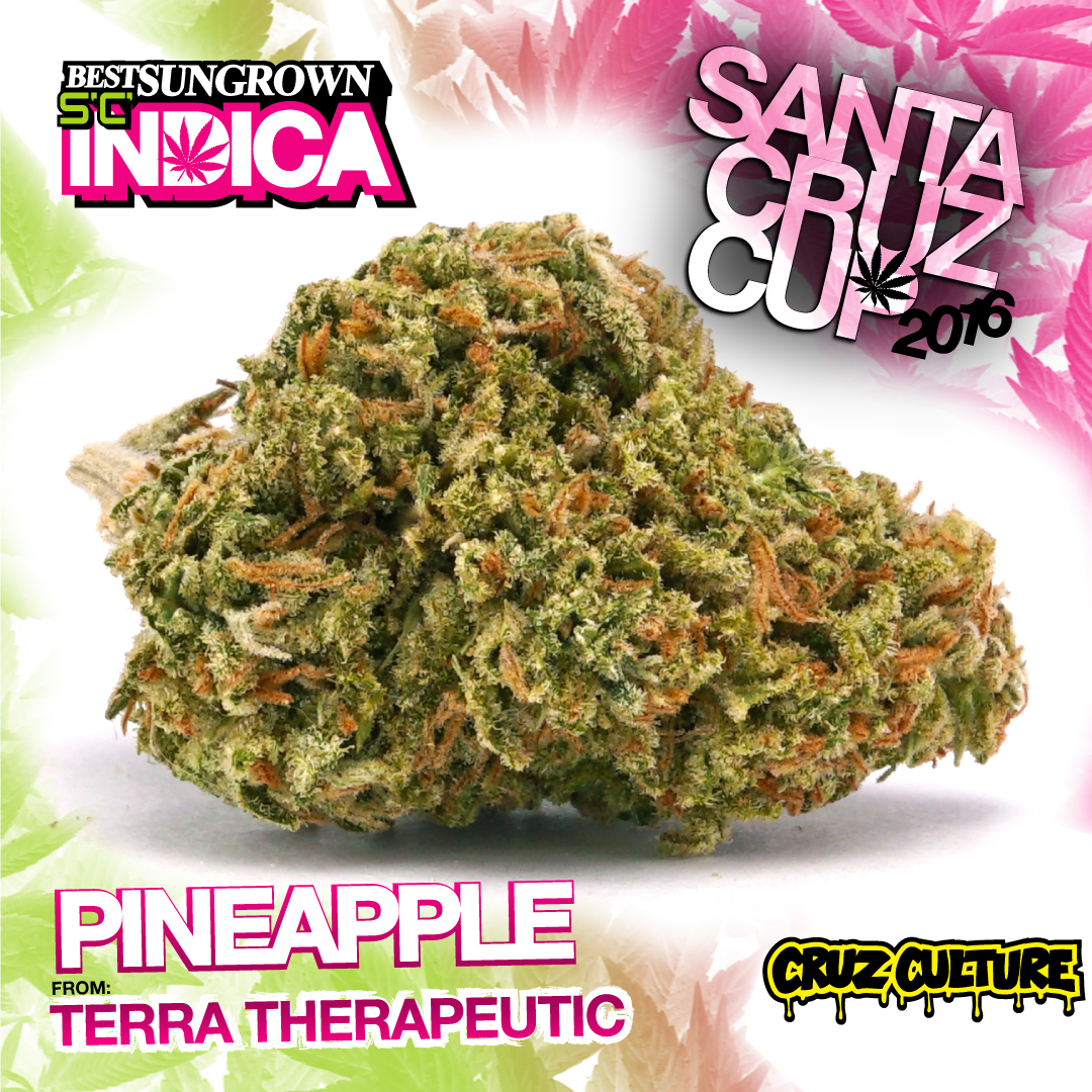 Terra therapeutic pineapple strain