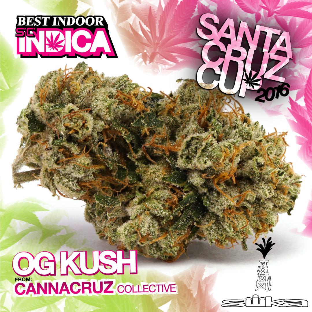 Cannacruz Collective OG Kush